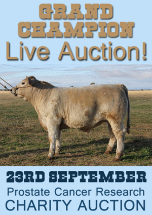 Grand Champion LIVE AUCTION!